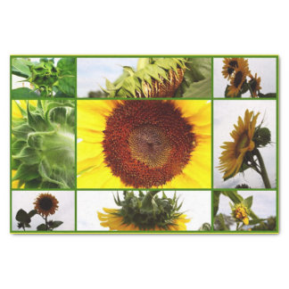 Mammouth Sunflower Collage-Tissue Wrap Paper