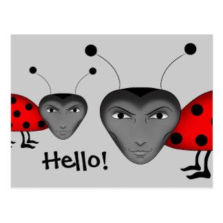 Man bugs postcard