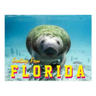 Manatee Florida Postcard