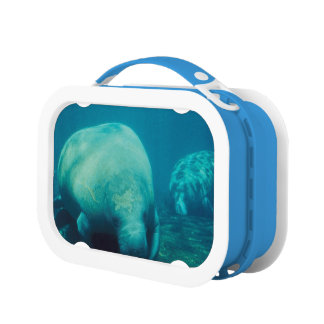 Manatees Lunch Box