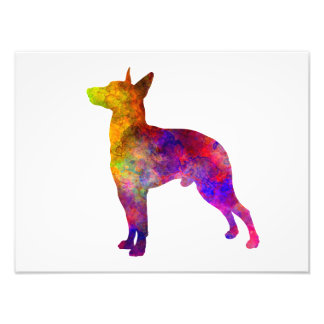 Manchester Terrier in watercolor Photo Print
