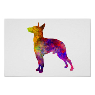 Manchester Terrier in watercolor Poster