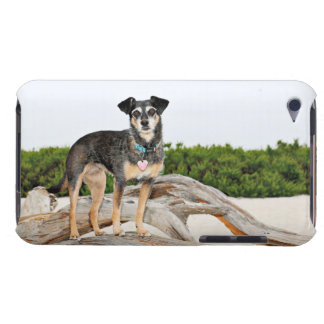 Manchester Terrier X - Jordan - Derr Barely There iPod Cases