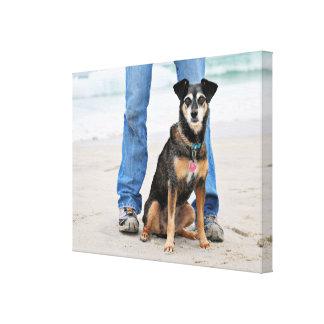 Manchester Terrier X - Jordan - Derr Canvas Print