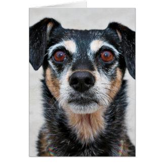 Manchester Terrier X - Jordan - Derr Card