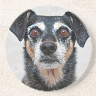 Manchester Terrier X - Jordan - Derr Coasters