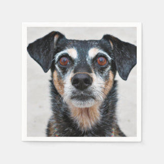 Manchester Terrier X - Jordan - Derr Disposable Napkin