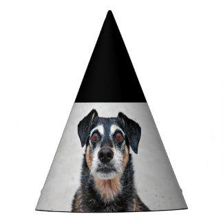 Manchester Terrier X - Jordan - Derr Party Hat