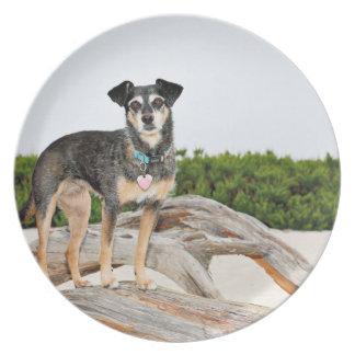 Manchester Terrier X - Jordan - Derr Plate