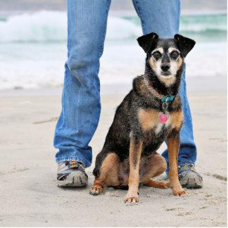 Manchester Terrier X - Jordan - Derr Standing Photo Sculpture