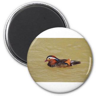 Mandarin Duck 2 Inch Round Magnet