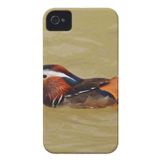 Mandarin Duck iPhone 4 Cases