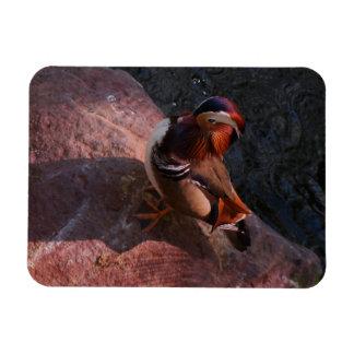Mandarin Duck Magnet