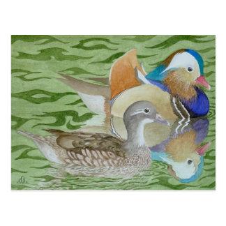 Mandarin Ducks on a lake Postcard