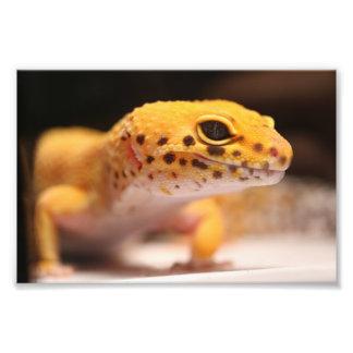 Mandarin Leopard Gecko Photo