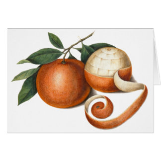 Mandarin Oranges: Antique Painting from China Card