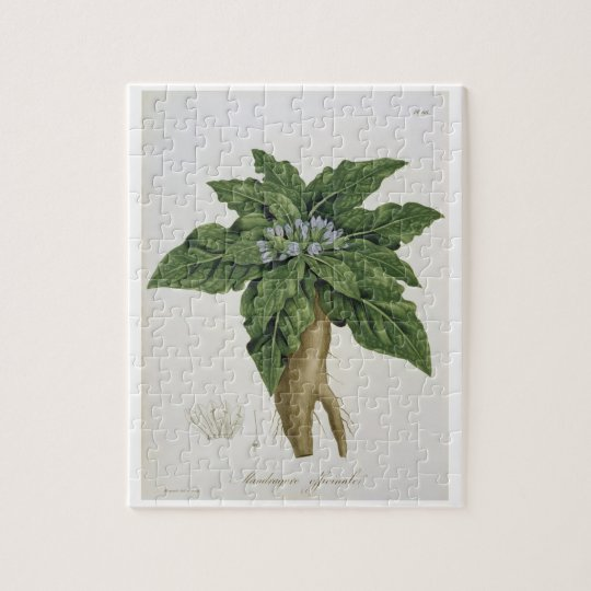 Mandragora Officinarum from 'Phytographie Medicale Jigsaw Puzzle