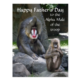 Mandrill Monkey Father's Day postcard
