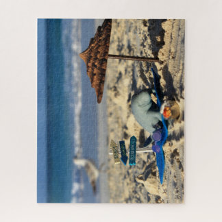 Manfred the manatee on the beach with a seagull jigsaw puzzle