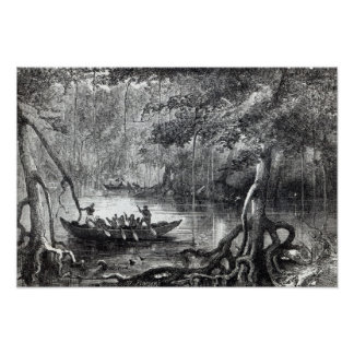 Mangrove Forest' Poster