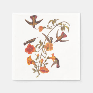 Mangrove Hummingbird with Orange Flowers Paper Napkin