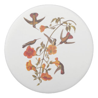 Mangrove Hummingbirds with Orange Trumpet Flowers Eraser