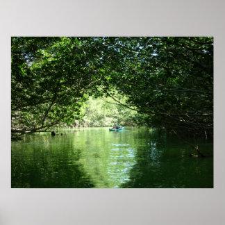Mangrove Kayaking Poster