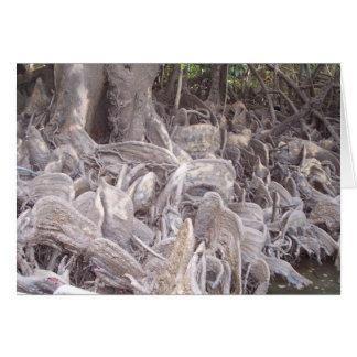 Mangrove Roots Card