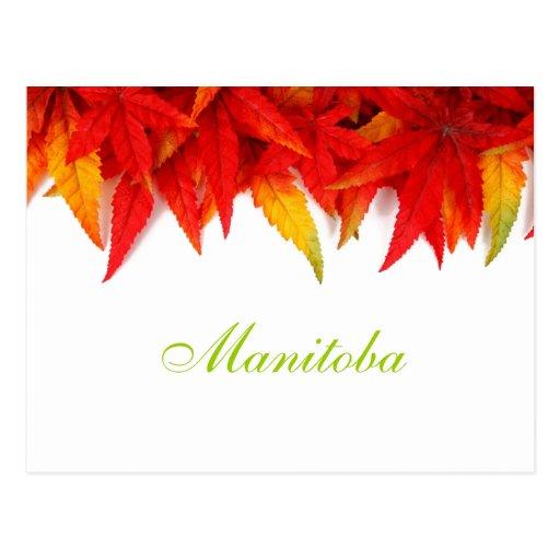 Manitoba Autumn Leaves Postcard
