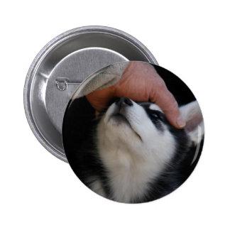 Man's Best Friend Siberian Husky Puppy Buttons