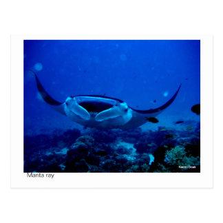 manta ray postcard - 01