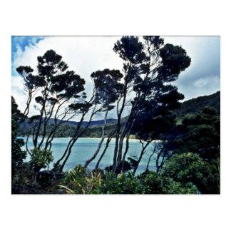 Manuka Shrubs And Beach, Stewart Island Postcard