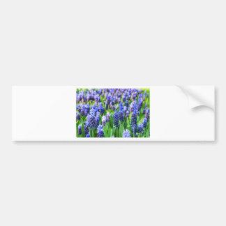 Many blue grape hyacinths bumper sticker