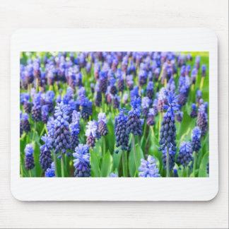 Many blue grape hyacinths mouse pad