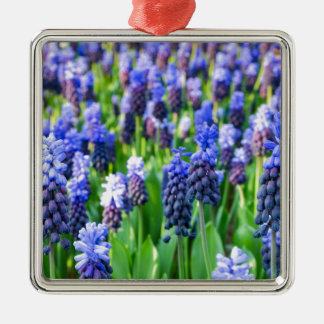 Many blue grape hyacinths Silver-Colored square ornament