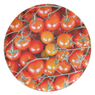 Many bunches of red vine tomatoes plates