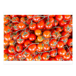 Many bunches of red vine tomatoes postcard