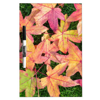Many colorful autumn maple leaves on green grass dry erase board