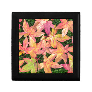 Many colorful autumn maple leaves on green grass gift box