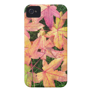 Many colorful autumn maple leaves on green grass iPhone 4 covers