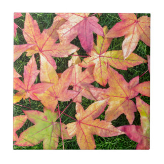 Many colorful autumn maple leaves on green grass tile