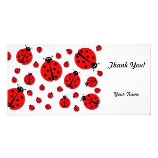 Many Ladybugs Shadows Photo Greeting Card