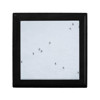 Many mosquitoes on a wall gift box