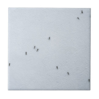 Many mosquitoes on a wall tile