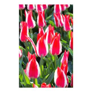 Many red-white tulips stationery design