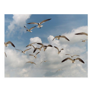 Many Seagulls Postcard