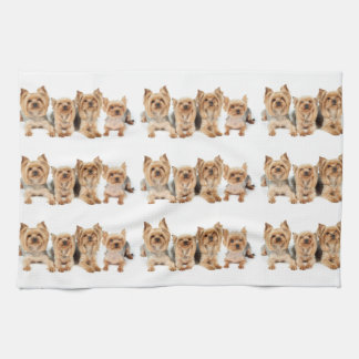 Many yorkies hand towels
