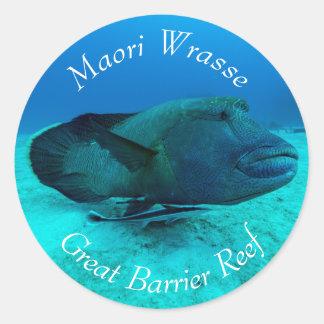 Maori Wrasse on the Great Barrier Reef Round Sticker