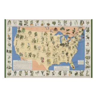 Map of Herbal Remedies poster