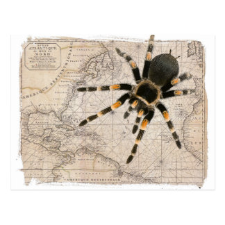 map spider postcard